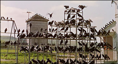 Masses of crows gather and perch, patiently waiting to attack.